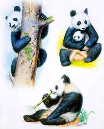 panda_3tai_youk