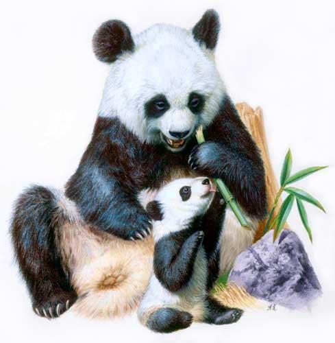 panda_oyako_youk