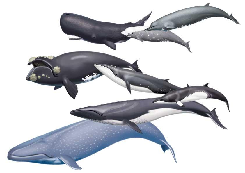 クジラの画像 p1_32