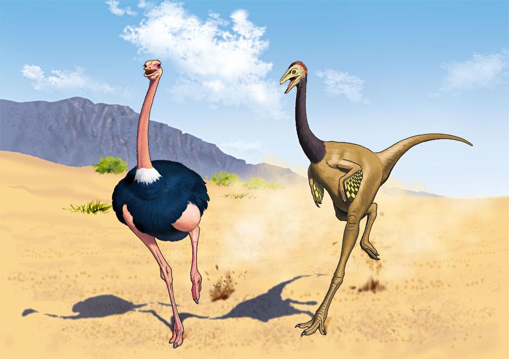 datyou_vs_ornithomimus